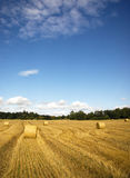 Hay bales on wheat field Stock Photos