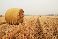 Hay bales in a wheat field Royalty Free Stock Images