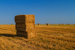 Hay Bales. On wheat field Royalty Free Stock Photos
