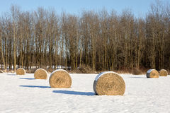 Hay Bales in a Winter Field Stock Photos