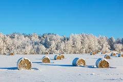 Hay bales on a winter field. Hay bales on a snowy field Royalty Free Stock Photography