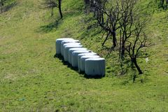 Hay bales wrapped in nylon for preservation left in grass covered field next to trees without leaves. On warm sunny spring day stock images