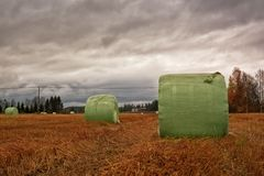 Hay Bales Wrapped In Plastic On The Autumn Fields. The hay bales have been wrapped in green plastic on the autumn fields. The dramatic sky predicts some heavy royalty free stock images