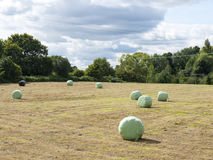 Hay bales. Wrapped up hay bales in summer Stock Photography