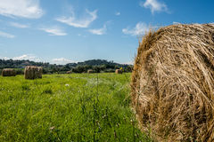 Hay ball. S in a green field in countryside rome italy Stock Photos