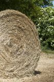 Hay ball detail. In a corn field, bushes in background Stock Photos
