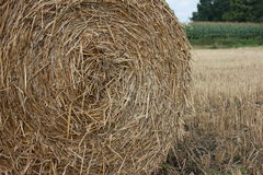 Hay ball / Straw ball with a sky Stock Image