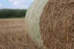 Hay ball / Straw ball with a sky Stock Photo