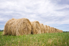 Hay balls. In the grass under a cloudy sky Royalty Free Stock Images