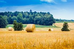 Hay balls after the harvest in autumn rolled ready stock photo