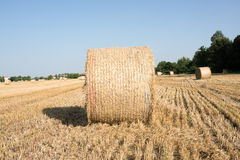 Hay balls in a wheat field Royalty Free Stock Photography