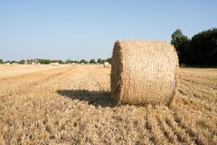 Hay balls in a wheat field Stock Photo