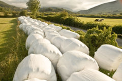 Hay balls in white plastic cover wrap bales Stock Images