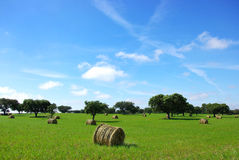 Hay  bayle in the field. Stock Photos