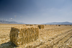 Hay bayle in the field Stock Photo