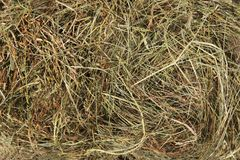 Hay bedding. Dry grass. Natural underlay. royalty free stock photos