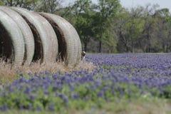 Hay Bluebonnets. Bales of hay flanking bluebonnet field Brenham TX Royalty Free Stock Image