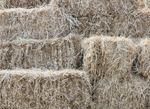 Hay briquette stack Stock Photography