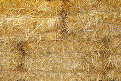 Hay briquette stack as animal food at animal farm as a backgroun Stock Photography