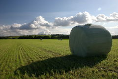 Hay bundles. Hay bundle after the harvest on a field royalty free stock photos