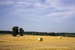 Hay bundles in a field. Stock Photo