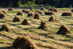 Hay bundles in field Stock Photo