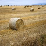 Hay bundles in the field. Large round bundles of hay in the field after harvest Royalty Free Stock Images