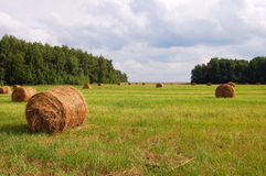 Hay bundles in the field Royalty Free Stock Photography
