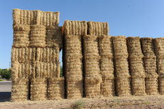 Hay bundles stacked up in the middle of a hay field Stock Photo