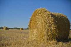 Hay in the canadian prairies Royalty Free Stock Photo