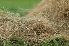 Hay close up Royalty Free Stock Images
