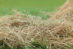 Hay close up Royalty Free Stock Photo