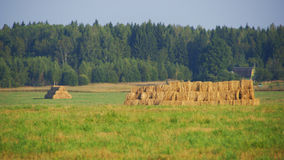 Hay collected in the field. Stock Photos