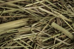 Hay collected in a stack on a clear day close-up stock photo