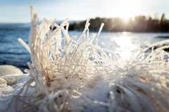 Hay covered in snow and sunshine Royalty Free Stock Images