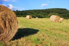 Hay crop Stock Image
