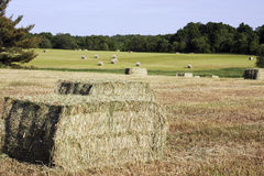 Hay crop bales round and square Royalty Free Stock Photos