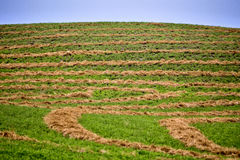 Hay Crop Swath Royalty Free Stock Images