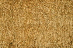 Hay cube texture Stock Image