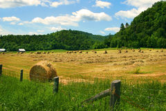 Hay cutting time stock photography