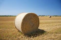 Hay cylinder Stock Image