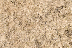 Hay or dry grass on the lawn. background Royalty Free Stock Image