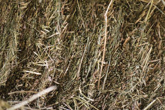 Hay. Dry plant nature food Royalty Free Stock Image