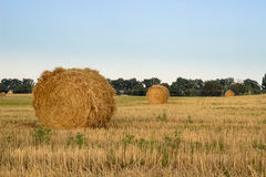 Hay Dry Stacks On Countryside Field During Harvest Time Stock Photos