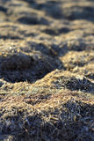 The hay is dry. Texture and background. Royalty Free Stock Image