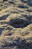 The hay is dry. Texture and background. Stock Photos