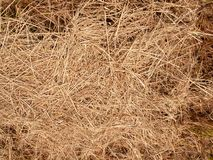 Free Hay Dry Texture With Close Up Image Stock Images - 154000554