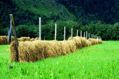 Hay drying, Norway Royalty Free Stock Photo