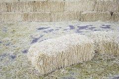Hay Farm Fotografie Stock