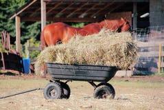 Hay for Farm Animals Stock Photo